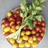 トマトにイタリアンパセリ