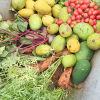 自然農法での収穫
